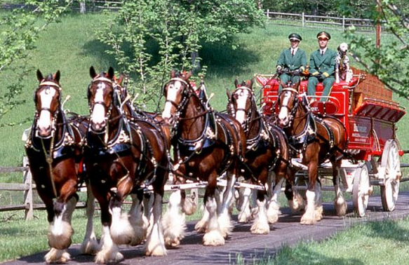 Watch the Budweiser Clydesdales today in Williamsburg VABudweiser Clydesdales In Snow