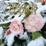 Talk of the Colony for Feb 2017